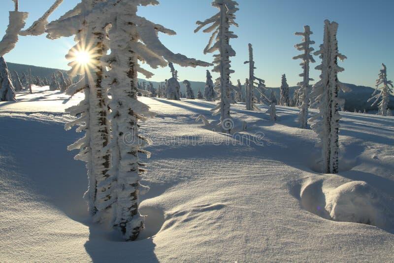 ηλιόλουστος χειμώνας στοκ εικόνα