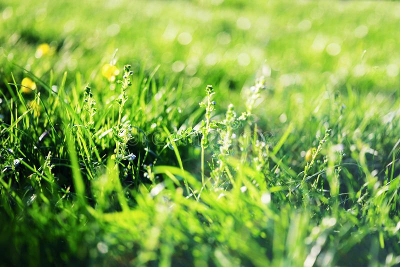 Ηλιόλουστο αφηρημένο πράσινο υπόβαθρο φύσης, εκλεκτική εστίαση στοκ φωτογραφία με δικαίωμα ελεύθερης χρήσης