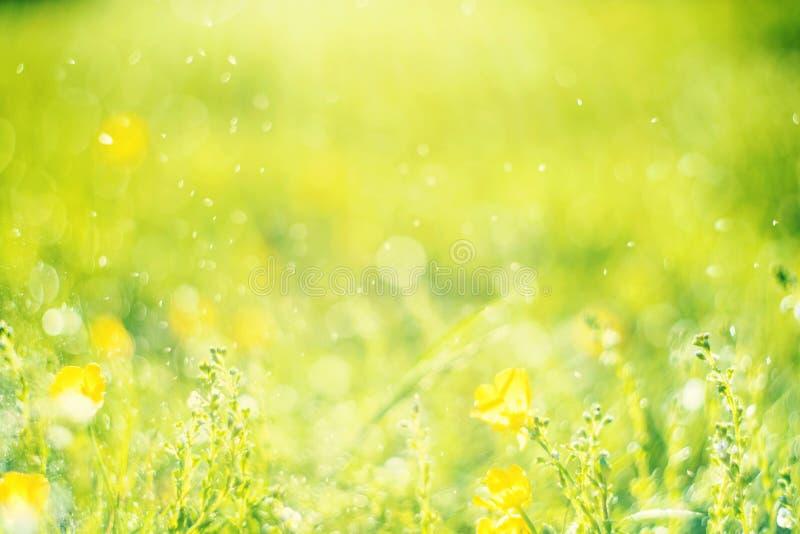 Ηλιόλουστο αφηρημένο πράσινο υπόβαθρο φύσης, εκλεκτική εστίαση στοκ εικόνες με δικαίωμα ελεύθερης χρήσης