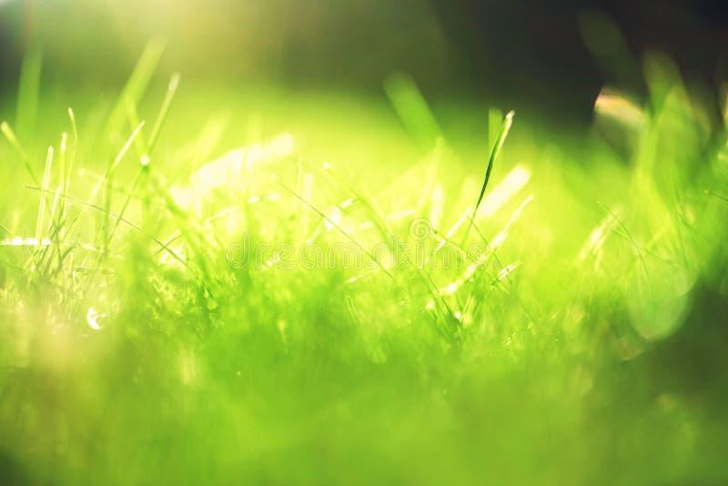 Ηλιόλουστο αφηρημένο πράσινο υπόβαθρο φύσης, εκλεκτική εστίαση στοκ εικόνες