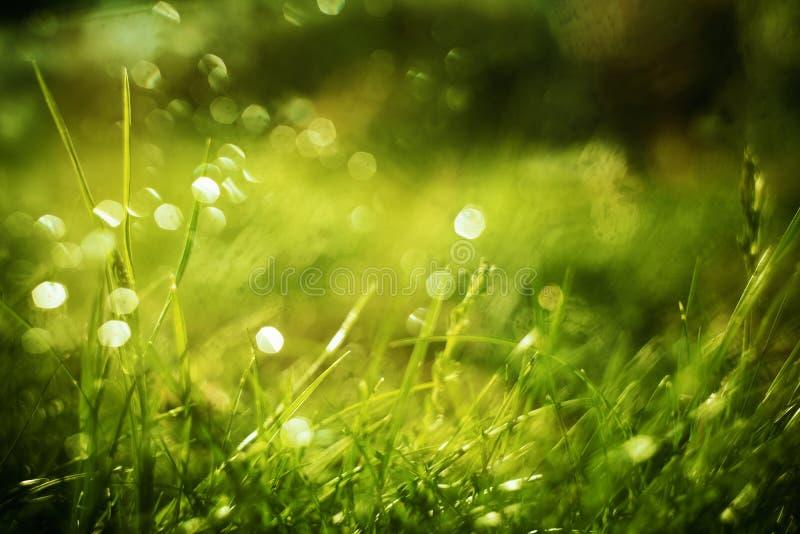 Ηλιόλουστο αφηρημένο πράσινο υπόβαθρο φύσης, εκλεκτική εστίαση στοκ φωτογραφίες