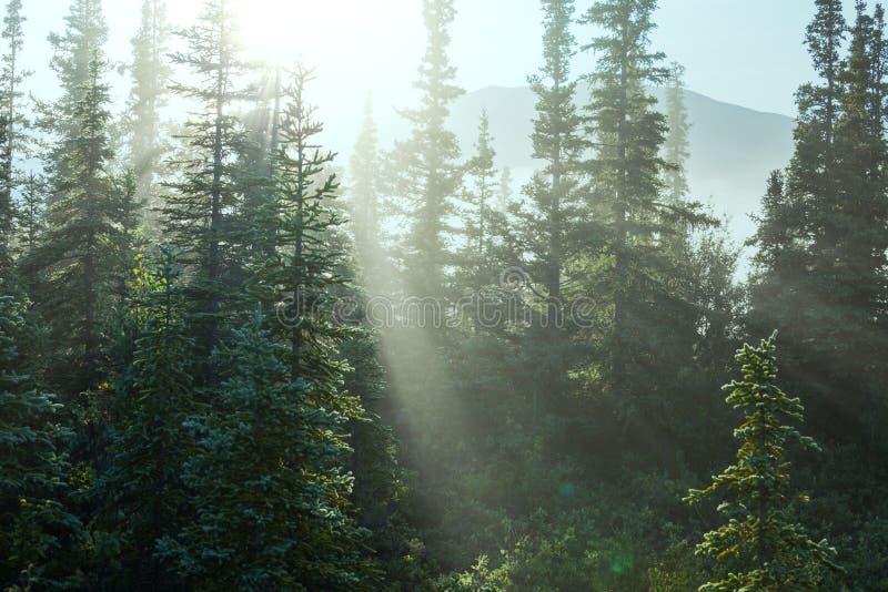 Ηλιόλουστο δάσος Στοκ Εικόνα