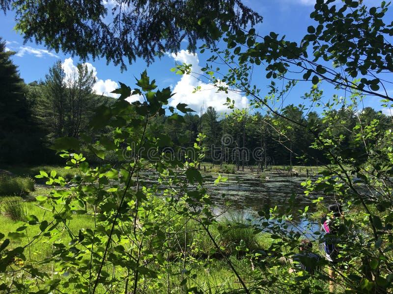 Ηλιόλουστο κρατικό πάρκο της Brooke στοκ φωτογραφία με δικαίωμα ελεύθερης χρήσης