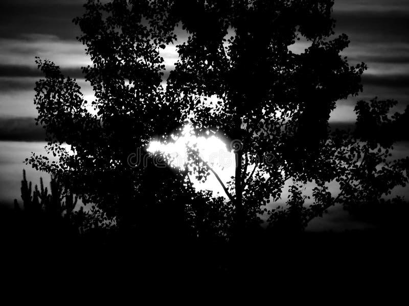 Ηλιόλουστο πρωί πέρα από πέρα από το λιβάδι στοκ φωτογραφία με δικαίωμα ελεύθερης χρήσης