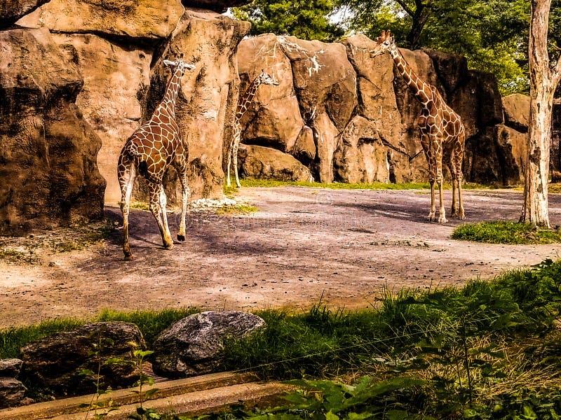 Ημέρα διασκέδασης στο ζωολογικό κήπο στοκ εικόνες