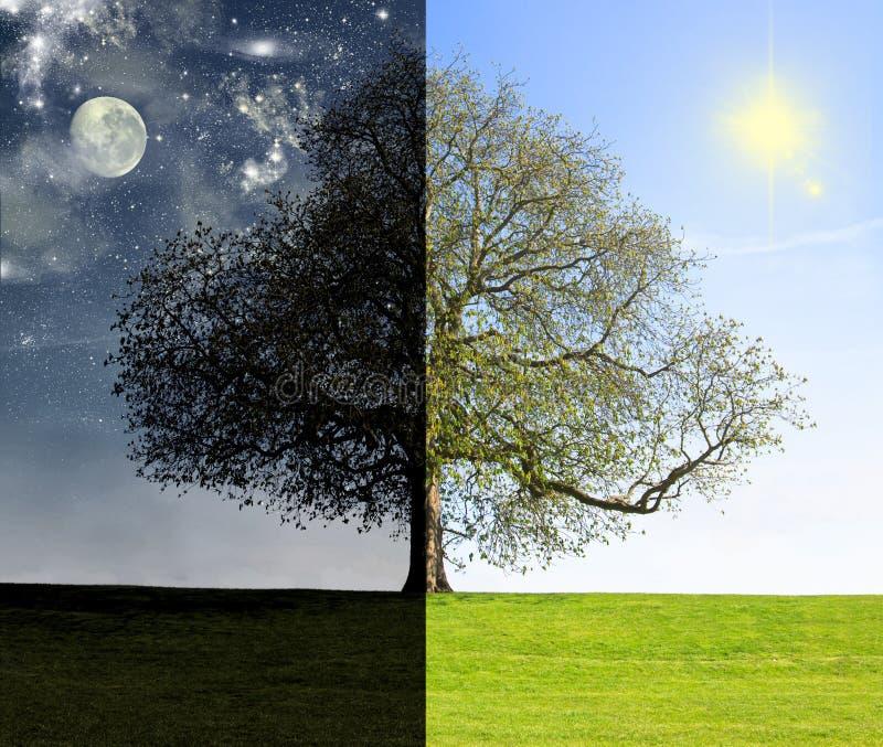 Ημέρα εναντίον της έννοιας δέντρων νύχτας στοκ εικόνα