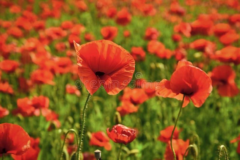 Ημέρα ενθύμησης, ημέρα Anzac, ηρεμία στοκ εικόνες με δικαίωμα ελεύθερης χρήσης