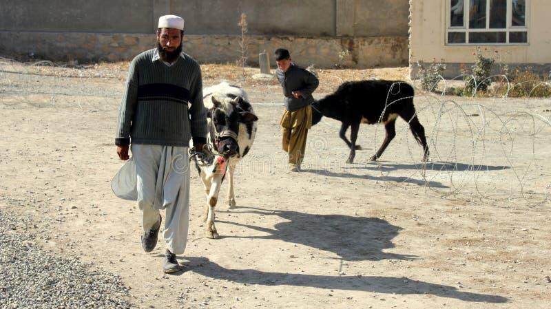 ημέρα κτηνιατρική στοκ φωτογραφία με δικαίωμα ελεύθερης χρήσης