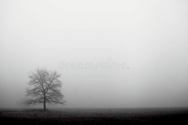 ημέρα ομιχλώδης στοκ φωτογραφίες
