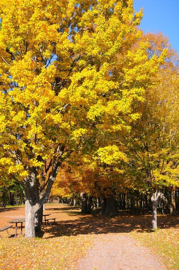 Ημέρα πτώσης Σεπτεμβρίου στο πάρκο στοκ εικόνα με δικαίωμα ελεύθερης χρήσης