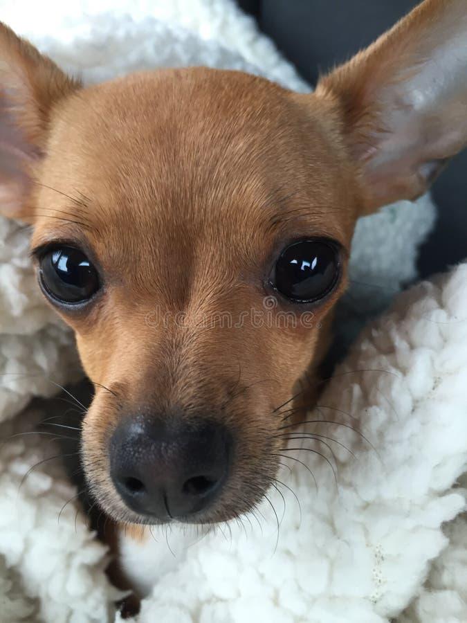 Ημέρα σκυλιών στοκ φωτογραφία με δικαίωμα ελεύθερης χρήσης