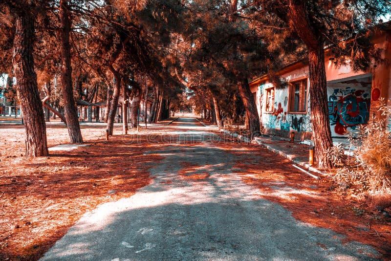 Ημέρα της Νίκαιας σε Θεσσαλονίκη τα δέντρα και τα φυτά είναι πέφτοντας τα φύλλα τους και το δάσος είναι τόσο ειρηνικό για να περπ στοκ εικόνες με δικαίωμα ελεύθερης χρήσης