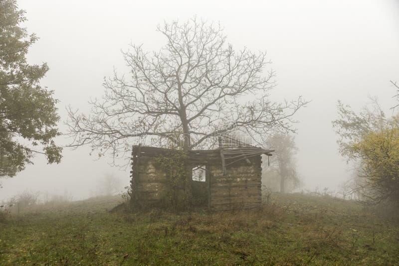 Ημέρα φθινοπώρου στα ξύλα στοκ εικόνες
