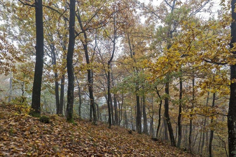Ημέρα φθινοπώρου στα ξύλα στοκ εικόνα