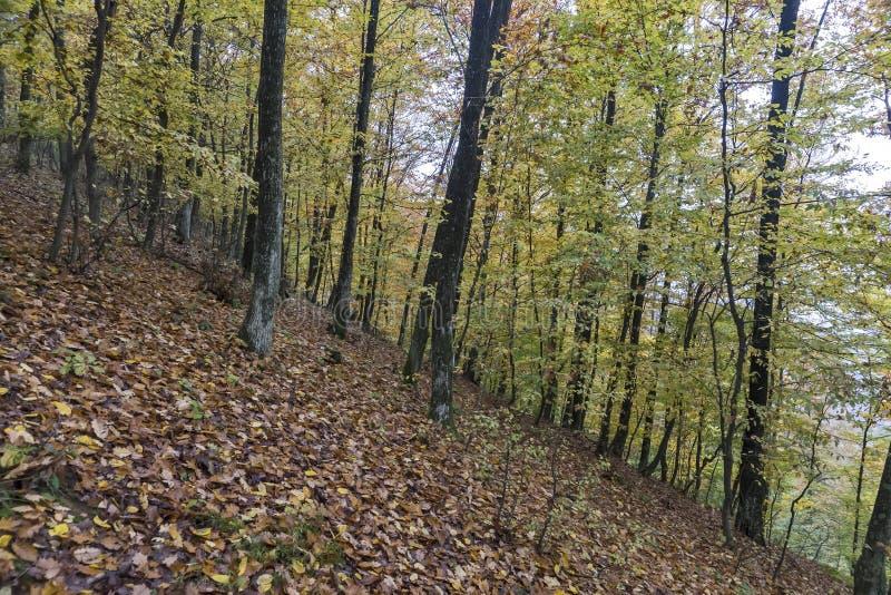 Ημέρα φθινοπώρου στα ξύλα στοκ εικόνες με δικαίωμα ελεύθερης χρήσης