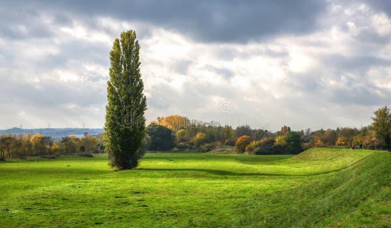 Ημέρα φθινοπώρου στη Γερμανία, μόνο δέντρο που στέκεται στον τομέα, νεφελώδης ουρανός στοκ φωτογραφίες με δικαίωμα ελεύθερης χρήσης