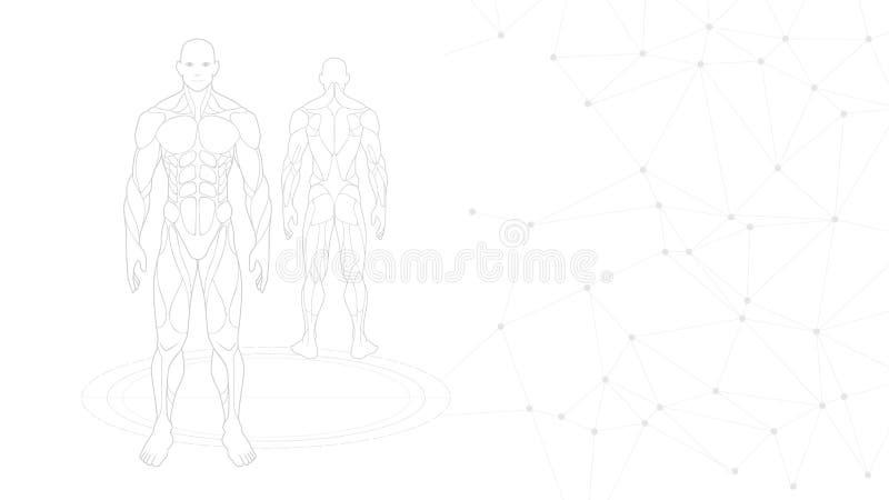 Ημίτονο γκριζόλευκο υπόβαθρο ταπετσαριών ολόγραμμα νέου ανατομίας ανθρώπινων σωμάτων μορφής περιγράμματος που προβάλλεται στο άσπ απεικόνιση αποθεμάτων