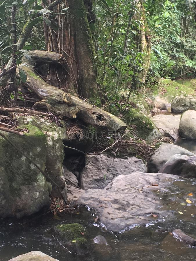 Ηρεμία κολπίσκου ζουγκλών στοκ εικόνες