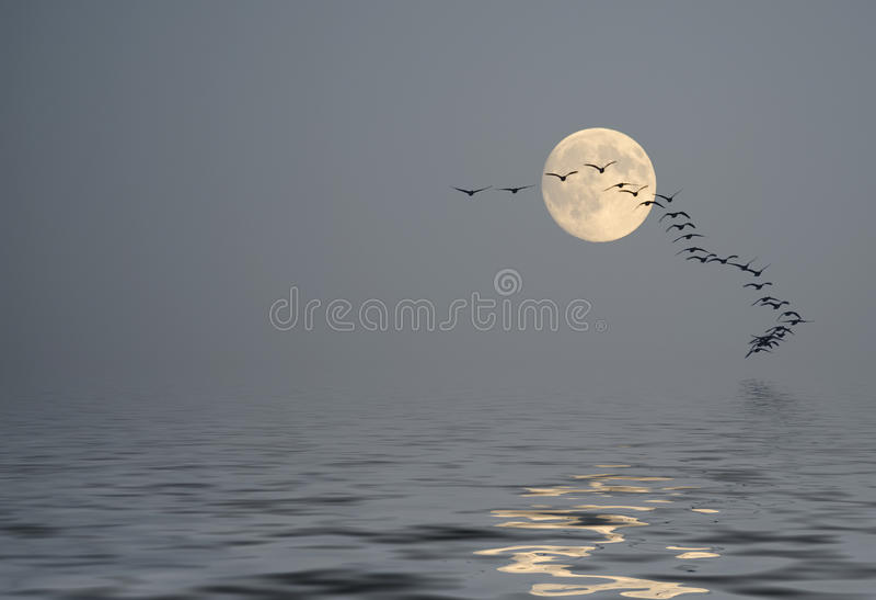 Ηρεμία πέρα από τον ωκεανό στη σκόνη πρωινού ελεύθερη απεικόνιση δικαιώματος