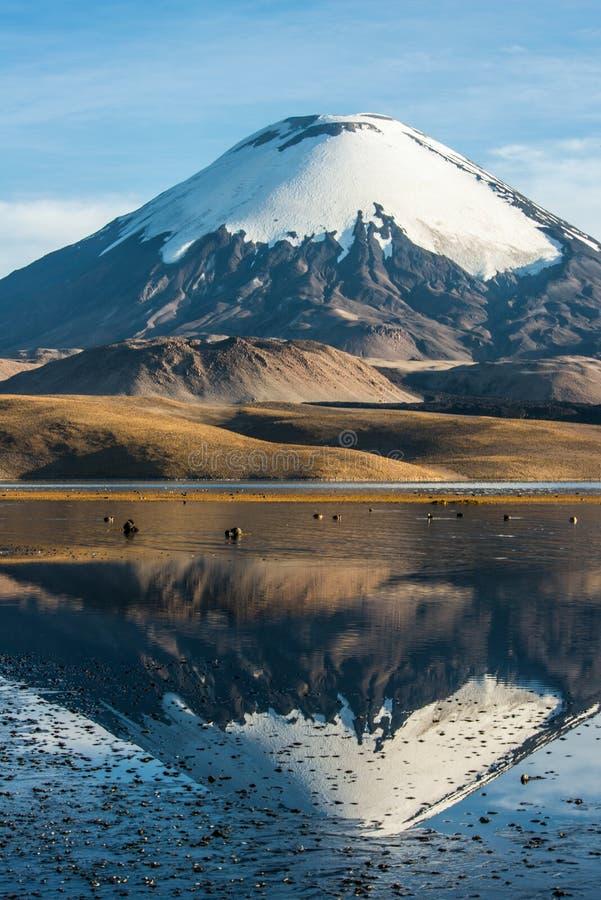 Ηφαίστειο Parinacota, Χιλή-Βολιβία στοκ εικόνες