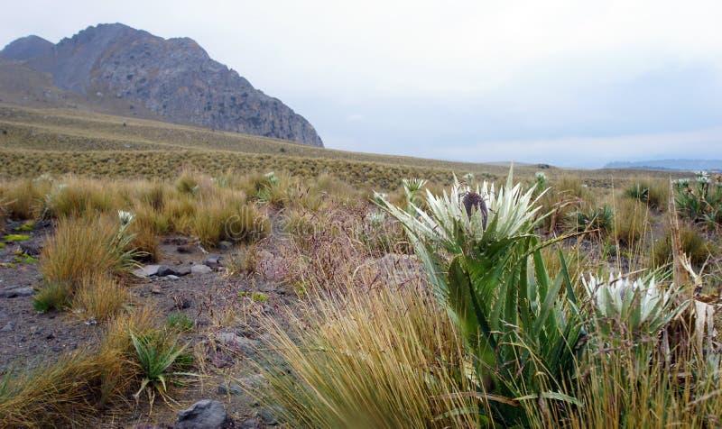 Ηφαιστειακό τοπίο Nevado de Toluca στοκ φωτογραφία με δικαίωμα ελεύθερης χρήσης