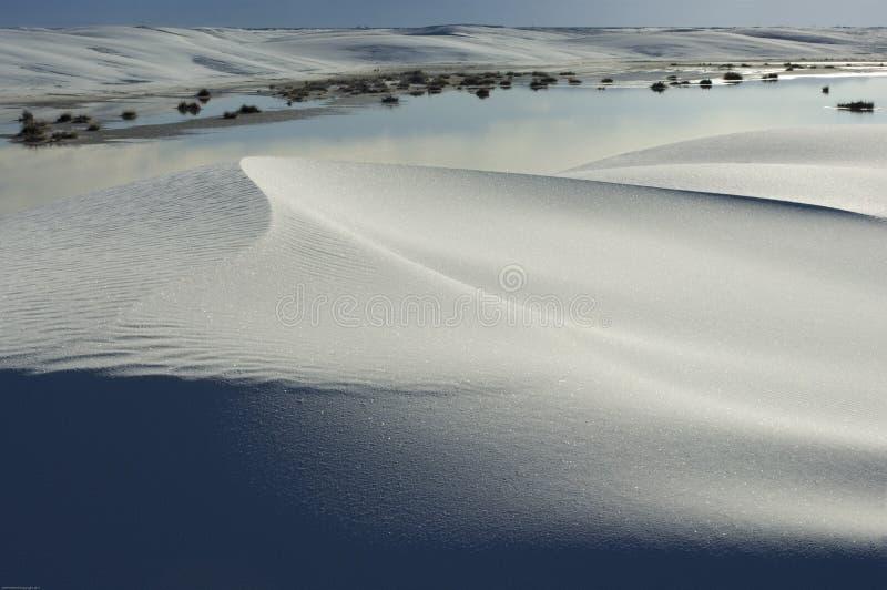 Η άμμος αστράφτει κατά μήκος των μαλακών καμπυλών των αμμόλοφων στο άσπρο εθνικό μνημείο άμμου s στοκ εικόνα