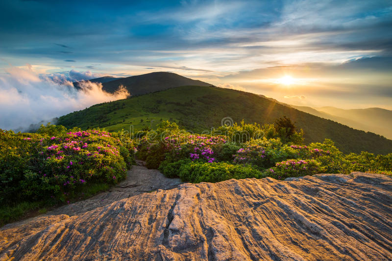 Η άνοιξη ανθίζει τα της όξινης απορροής ιχνών βουνά NC κορυφογραμμών ηλιοβασιλέματος μπλε στοκ εικόνες με δικαίωμα ελεύθερης χρήσης