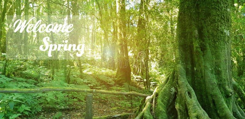 Η άνοιξη χαιρετίζει τη φύση το πρωί στοκ φωτογραφία με δικαίωμα ελεύθερης χρήσης