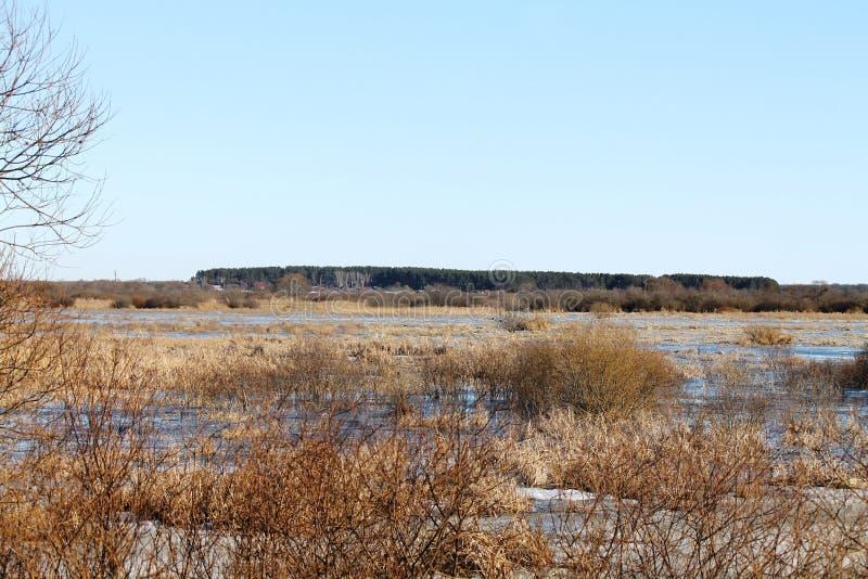 Η άνοιξη, χιόνι, χιόνι λειώνει, ήλιος, χλόη, ποταμός, seagulls στον ποταμό στοκ φωτογραφίες