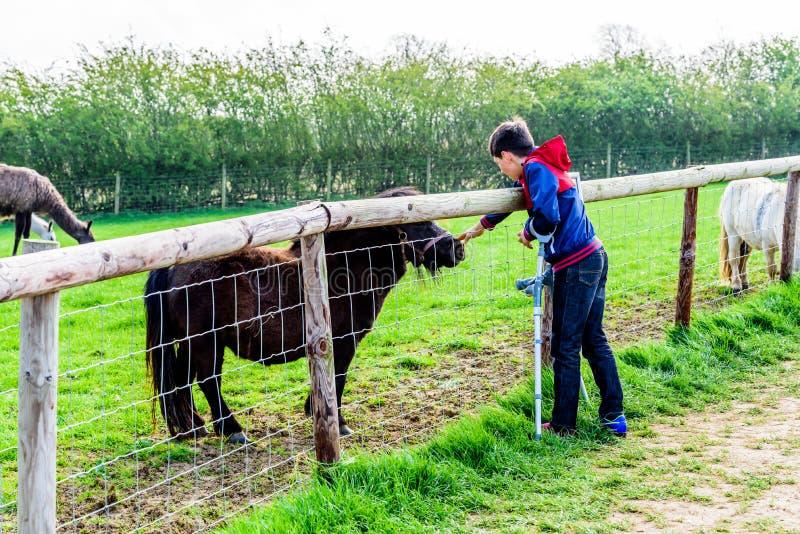 Η άποψη ημέρας καθιστούσε ανίκανη το αγόρι στα δεκανίκια που ταΐζει το άλογο στοκ φωτογραφίες με δικαίωμα ελεύθερης χρήσης