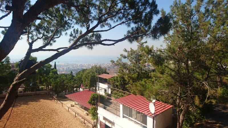 Η άποψη μέσω των δέντρων στοκ φωτογραφία με δικαίωμα ελεύθερης χρήσης
