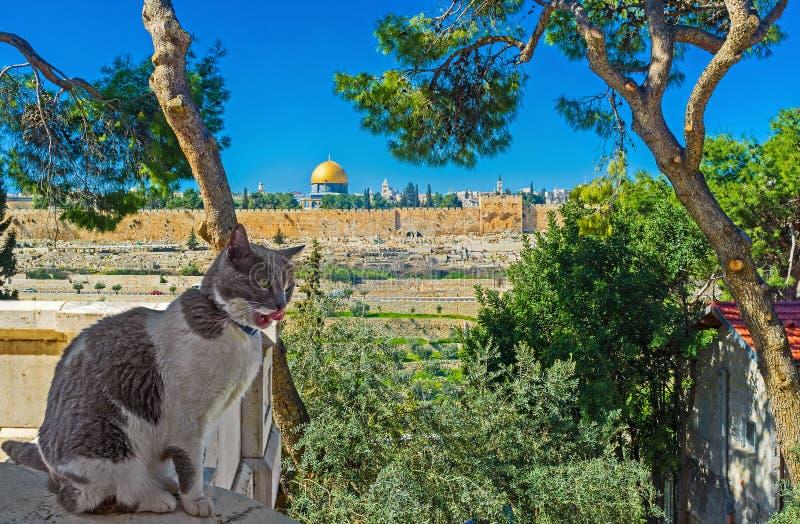 Η άποψη με μια γάτα στοκ εικόνα με δικαίωμα ελεύθερης χρήσης