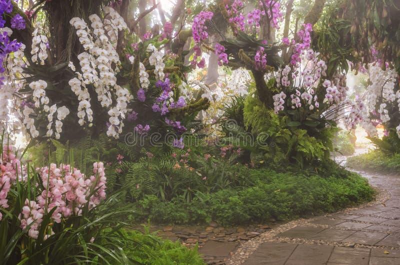 Η άποψη πρωινού της ζωηρόχρωμης εξωτικής ορχιδέας Phalaenopsis ανθίζει το Gard στοκ εικόνα με δικαίωμα ελεύθερης χρήσης