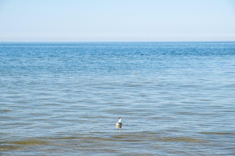 Η άποψη της παραλίας Zempin στοκ φωτογραφίες