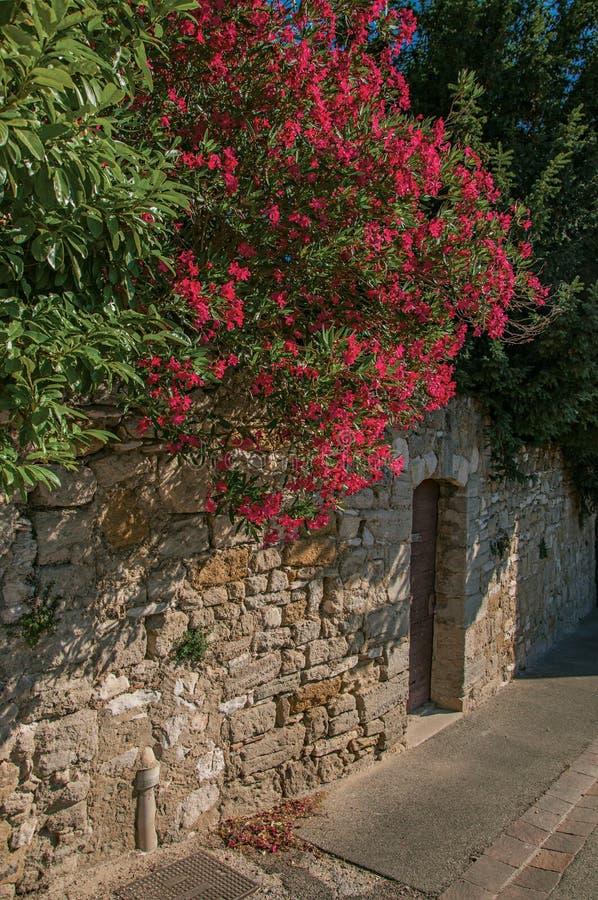 Η άποψη της παραδοσιακής πέτρας στεγάζει και λουλούδια σε μια οδό στην ανατολή, σε châteauneuf-de-Gadagne στοκ εικόνες