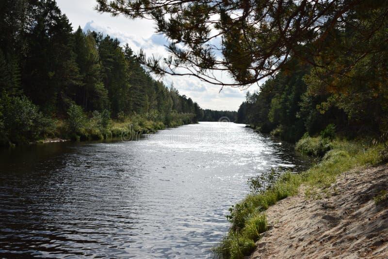 Η άποψη της προοπτικής του δασικού ποταμού στοκ εικόνες