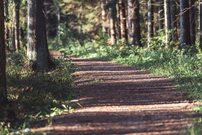 Η άποψη του δασικού δρόμου, τίτλος βαθύτερος στα ξύλα την ηλιόλουστη θερινή ημέρα, θόλωσε εν μέρει την εικόνα με ελεύθερου χώρου  στοκ φωτογραφία