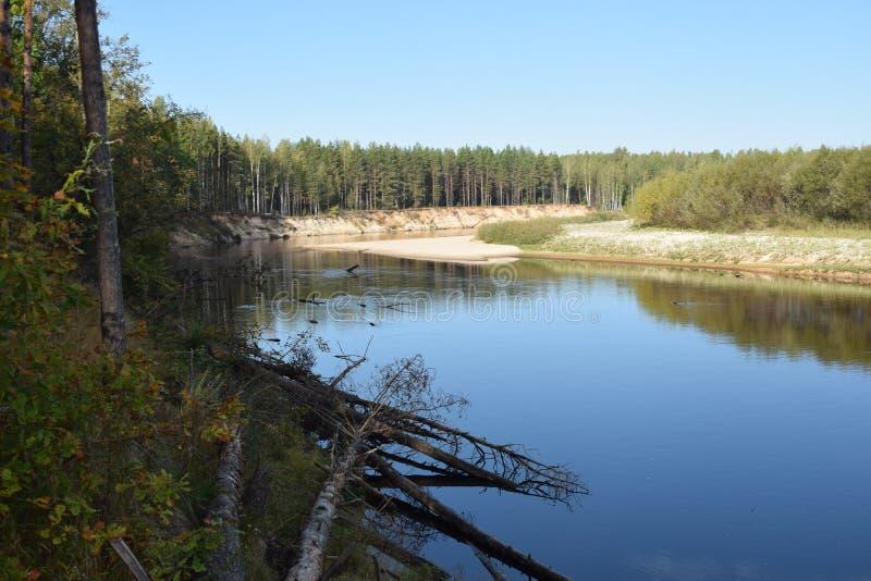 Η άποψη του δασικού ποταμού με τα πεύκα ενάντια στο μπλε ουρανό μεταξύ των τραπεζών άμμων στοκ εικόνες