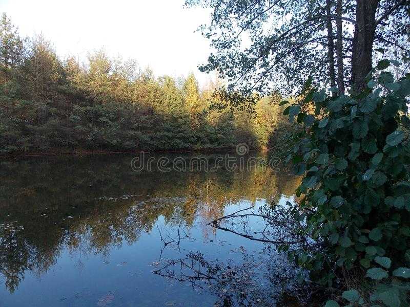 Η άποψη του δασικού ποταμού στροφής με τις σημύδες και pines4 στοκ εικόνες