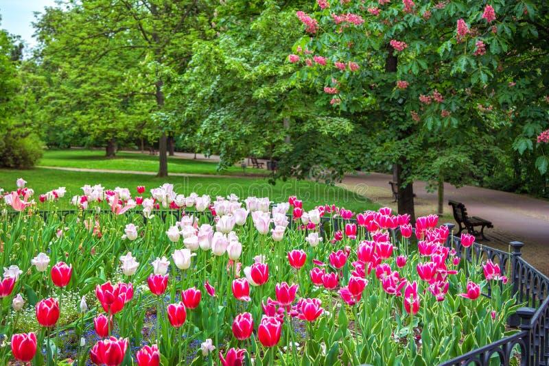Η άποψη του πάρκου †άνοιξη «με τις όμορφες ζωηρόχρωμες τουλίπες στοκ φωτογραφίες