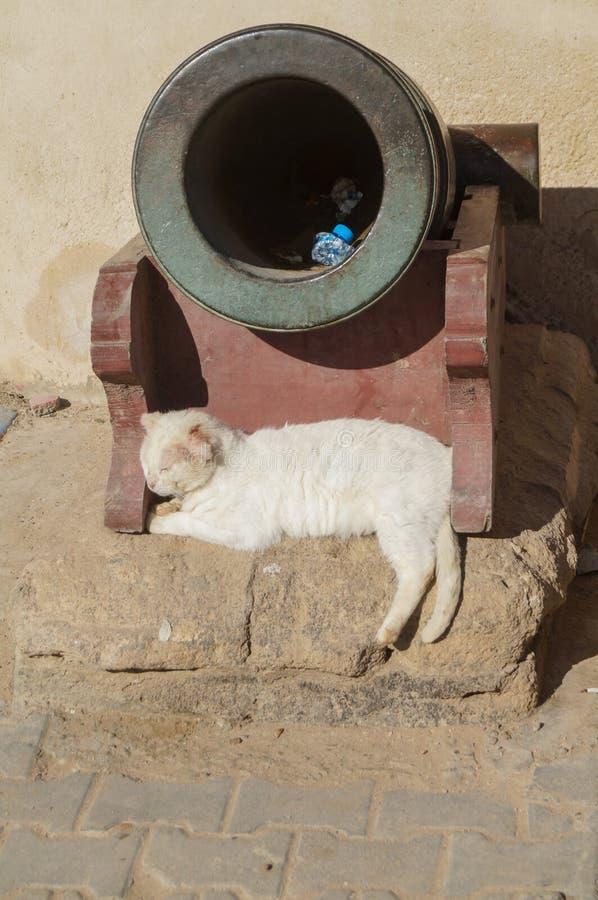 Η άσπρη γάτα που βρίσκεται απολαμβάνει τον ήλιο κάτω από το πυροβόλο όπλο στοκ φωτογραφία με δικαίωμα ελεύθερης χρήσης