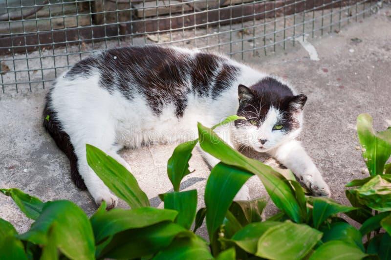 Η άσπρη γάτα στηρίζεται στον ήλιο στοκ εικόνα με δικαίωμα ελεύθερης χρήσης