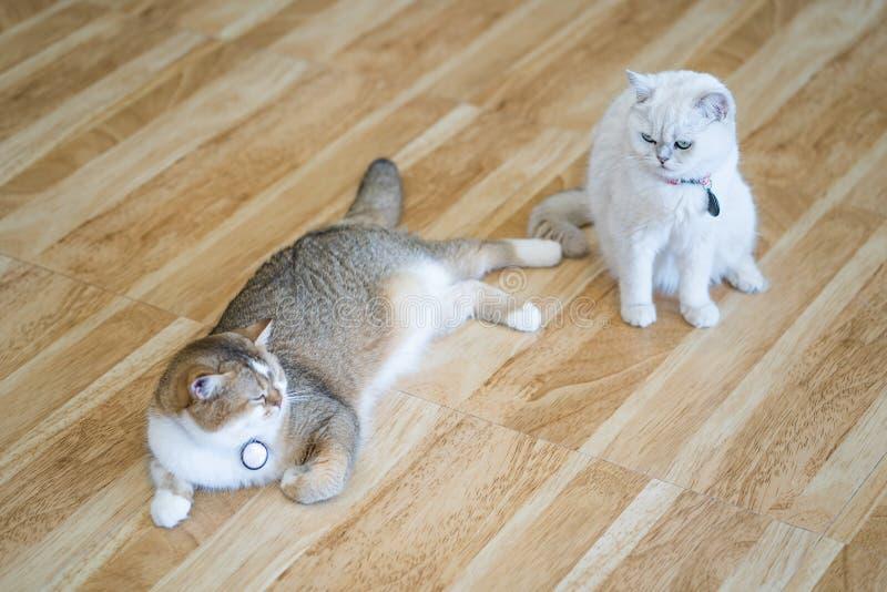 Η άσπρη γάτα στο κρεβάτι ευτυχώς στο δωμάτιο στοκ φωτογραφίες