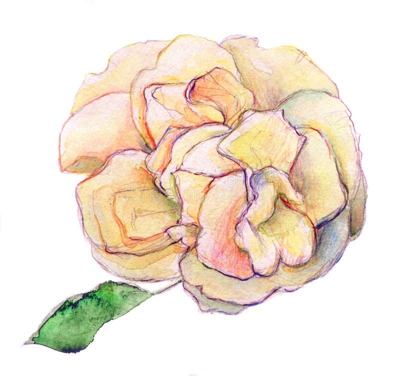 Η άσπρη σκιά ρόδινος και κίτρινος αυξήθηκε λουλούδι - watercolor στο υπόβαθρο διανυσματική απεικόνιση