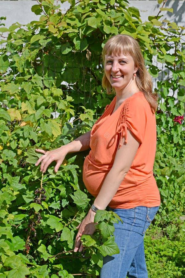 Η έγκυος γυναίκα στέκεται κοντά σε έναν θάμνο της μαύρης σταφίδας στοκ φωτογραφία