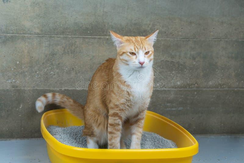Η έκκριση των γατών είναι στερεότυπη καθημερινά στοκ εικόνες