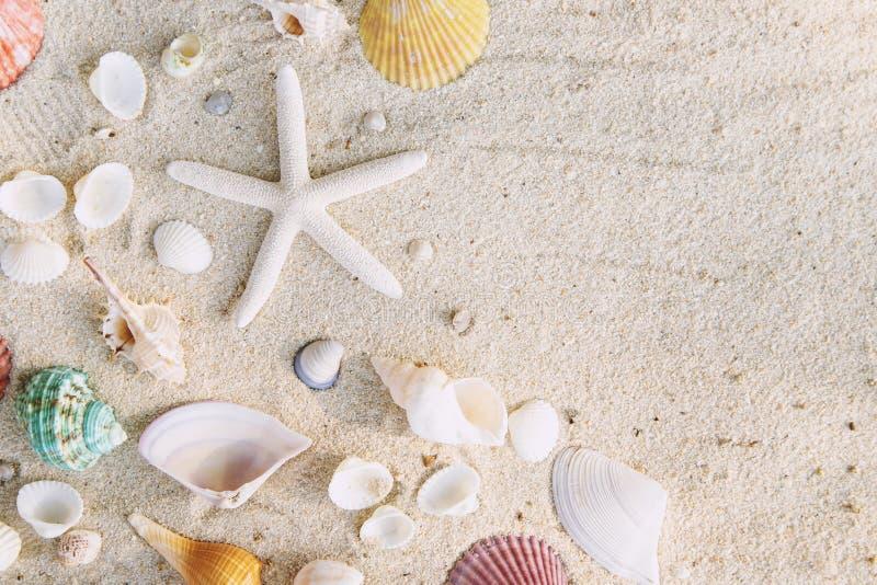 Η έννοια θερινού χρόνου με τα κοχύλια θάλασσας και ο αστερίας στην παραλία στρώνουν με άμμο το λευκό στοκ εικόνα