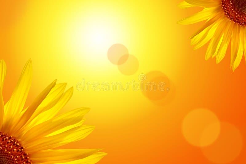Ηλίανθος ενάντια στον ήλιο ελεύθερη απεικόνιση δικαιώματος