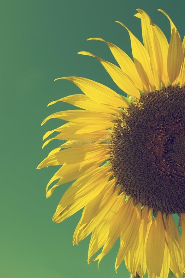 Ηλίανθος και μπλε ουρανός, εκλεκτής ποιότητας φίλτρο στοκ εικόνες με δικαίωμα ελεύθερης χρήσης