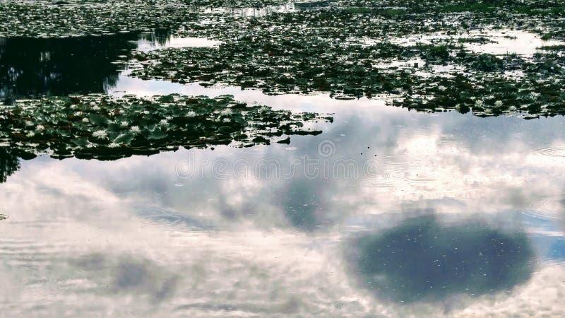 Η λίμνη κρίνων στοκ εικόνα με δικαίωμα ελεύθερης χρήσης